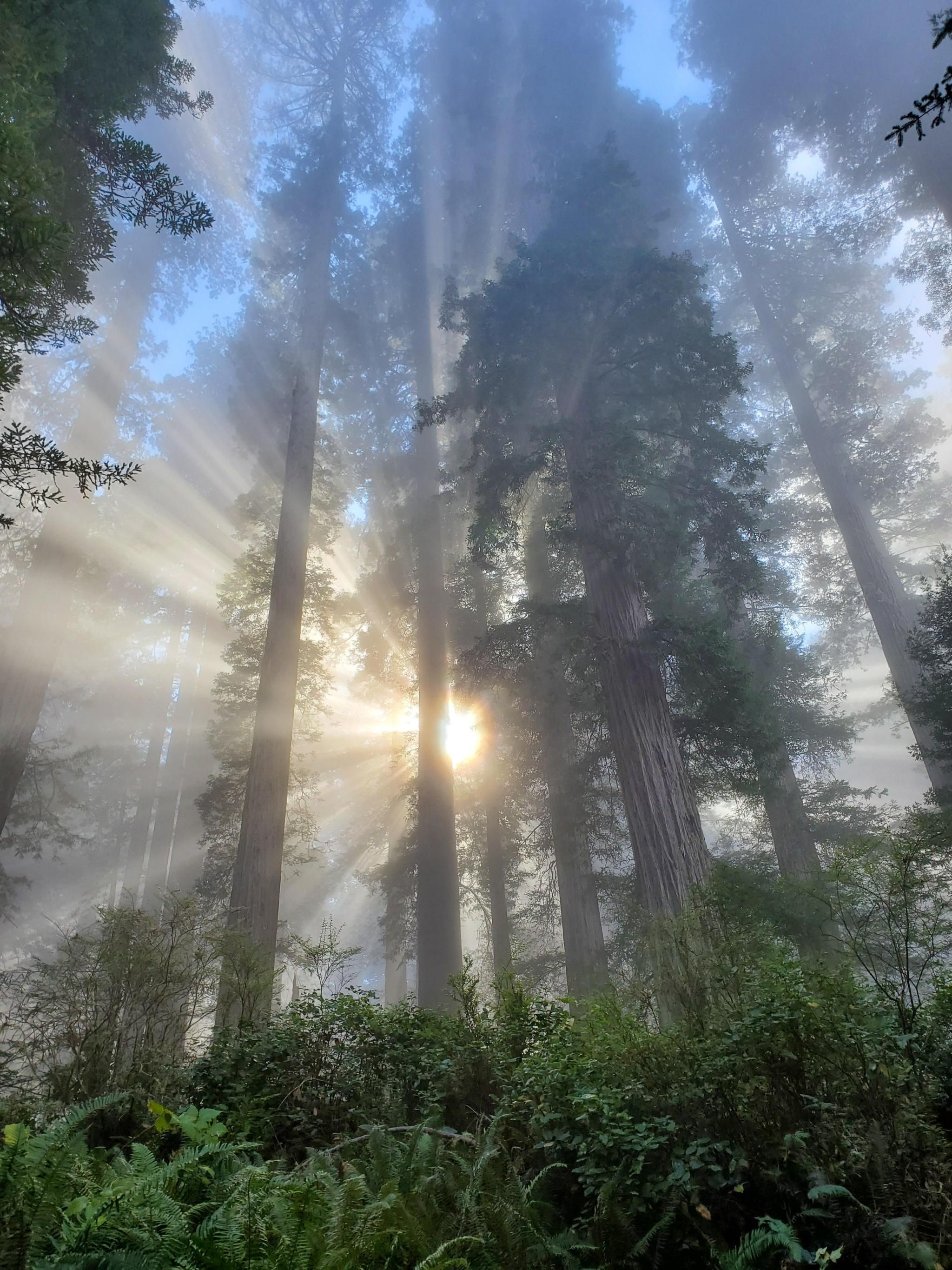 Working In A Redwood Forest When I Saw The Sun Blue Folder Nature Photography Redwood Forest Beautiful Nature