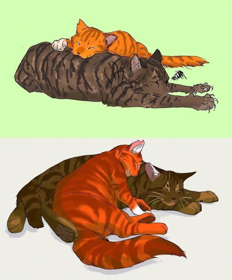 Cats In The Cradle Song Herdingcats Warrior Cat Drawings Warrior Cats Books Warrior Cats Fan Art