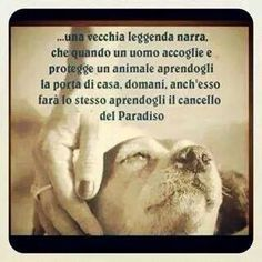 Frasi D Amore Sui Cani Donkirbyphotography Citazioni Sui Cani