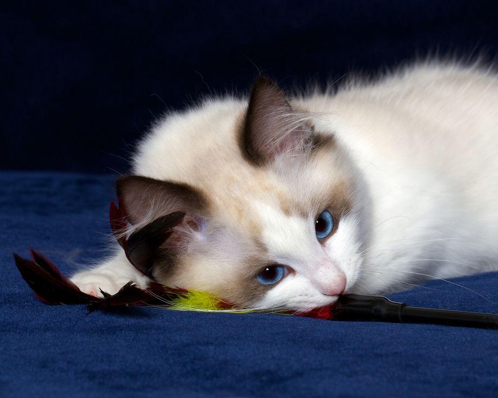 Ahhh Cute Kitten Don T You Just Love Cats Kittens Cutest Cats Kitten