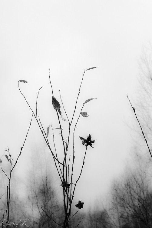 Up by Dmitry Kalmagaev