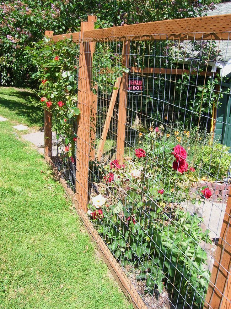 pictures of garden fence to keep chickens out | visit ...