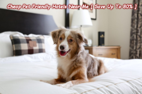 Cheap Pet Friendly Hotels Near Me Save Up To 80 Going To A