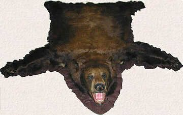 Real Bear Skin Rugs Animal Taxidermy For Bills