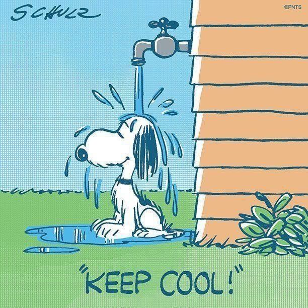 Trunte Snoopy, Snoopy love