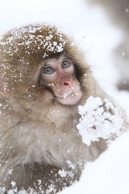 Snow Baby by Masashi Mochida, via Flickr