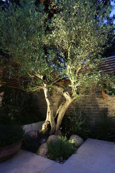 Outdoor Lighting Idea Backyard Lighting Garden Trees