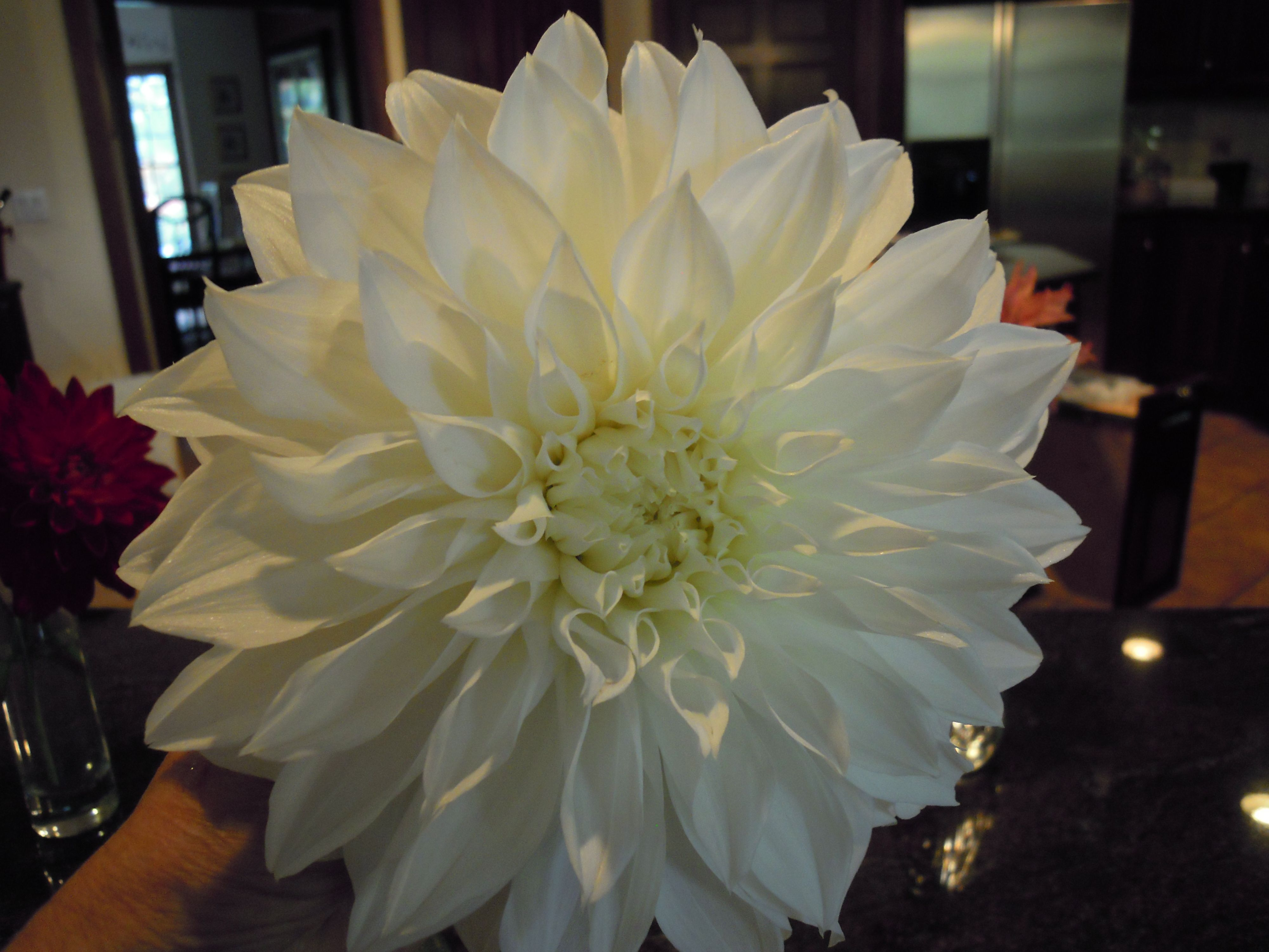 Award winning dahlia. They're fun to grow. What a great result.