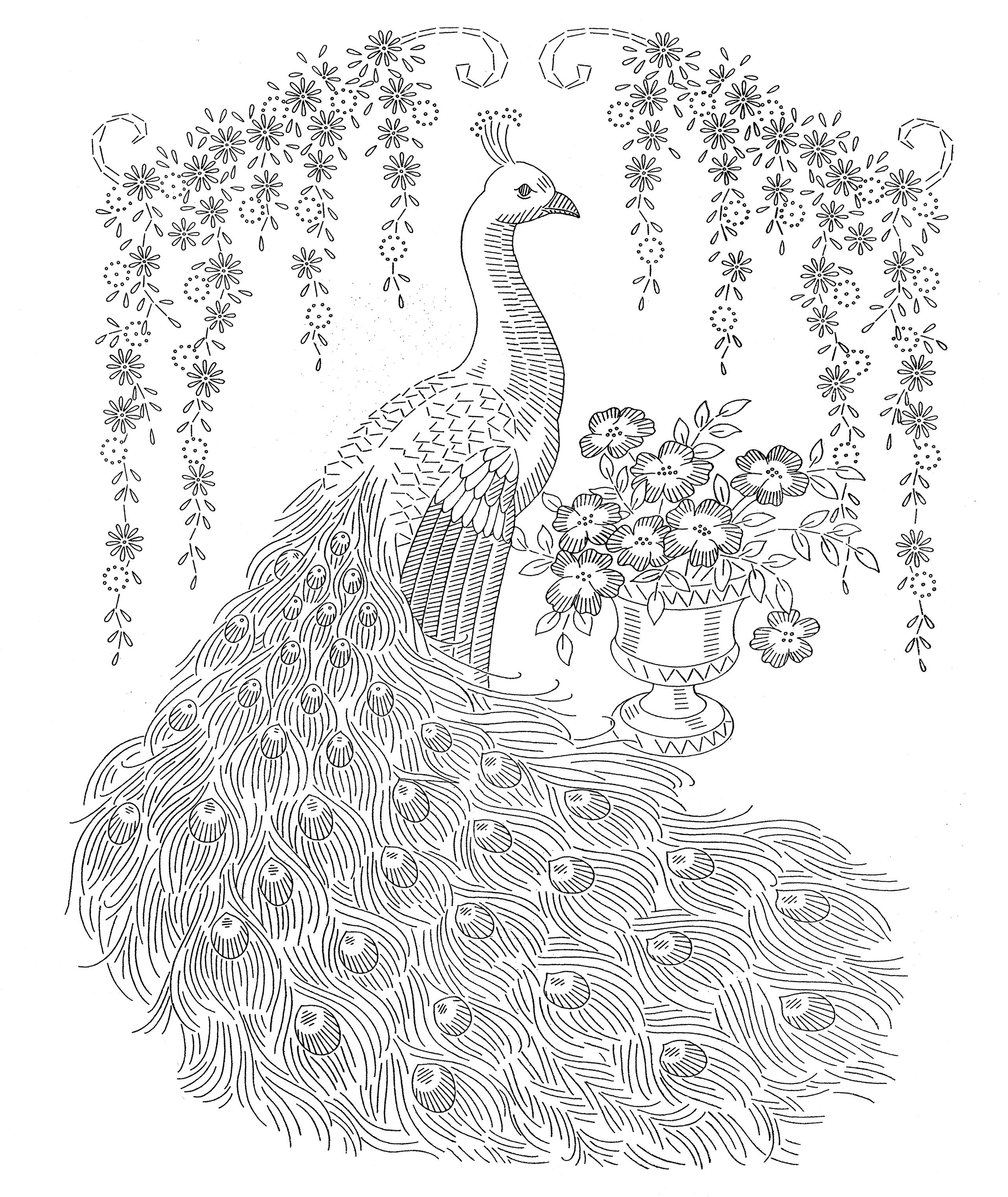 peacock feather colouring pages