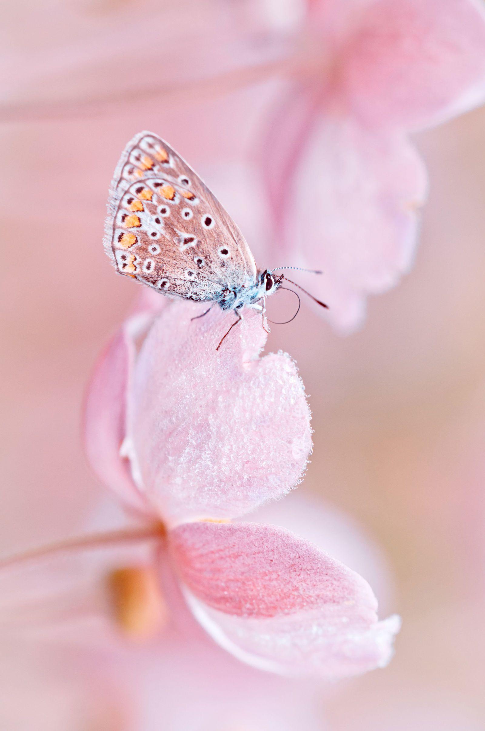 8 Million Reasons Rose Is The F Cking Best Beautiful Butterflies Best Rose Wine Pink Flowers Wallpaper
