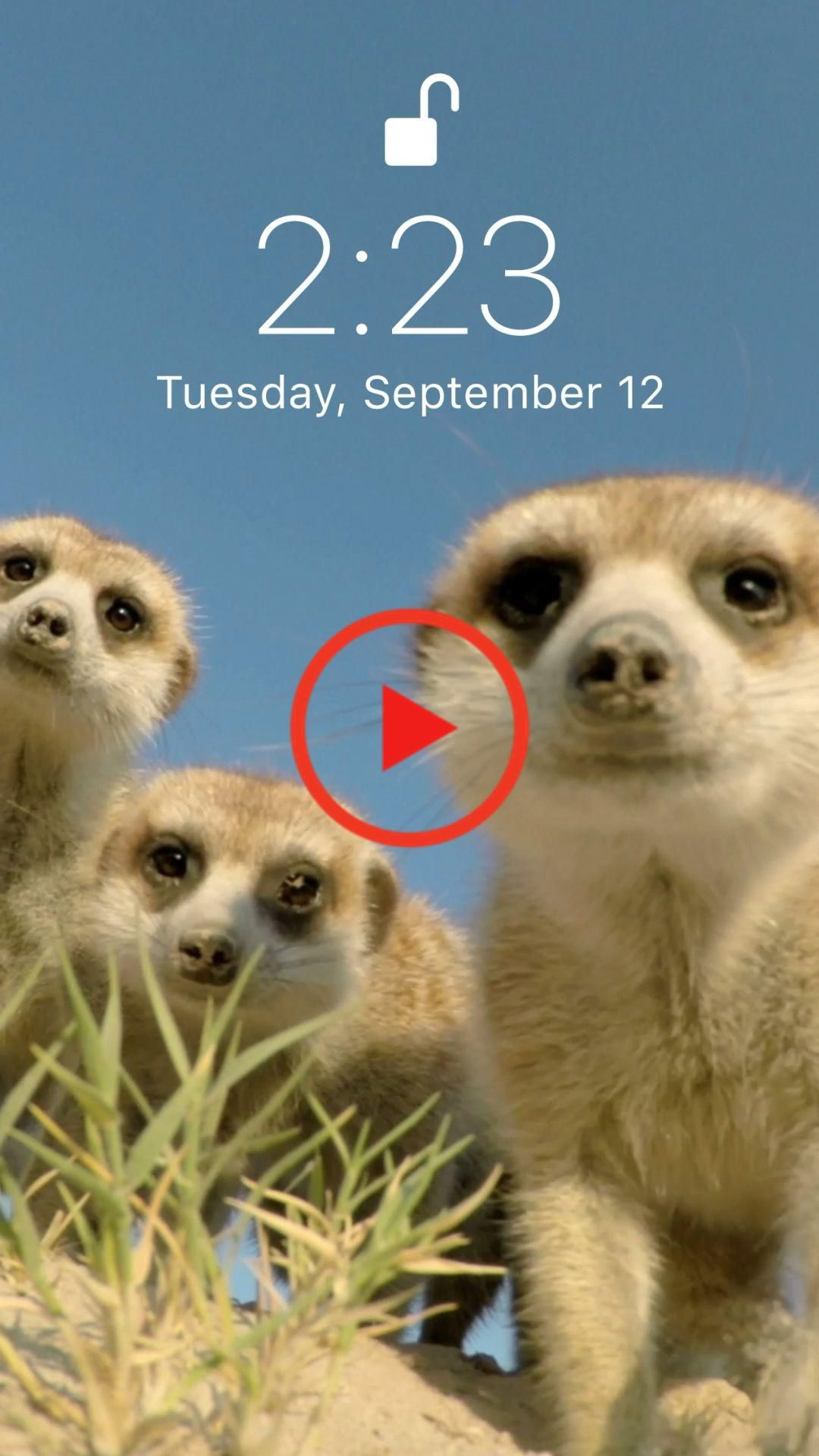 Funny live wallpaper for your iPhone XS from Everpix Live
