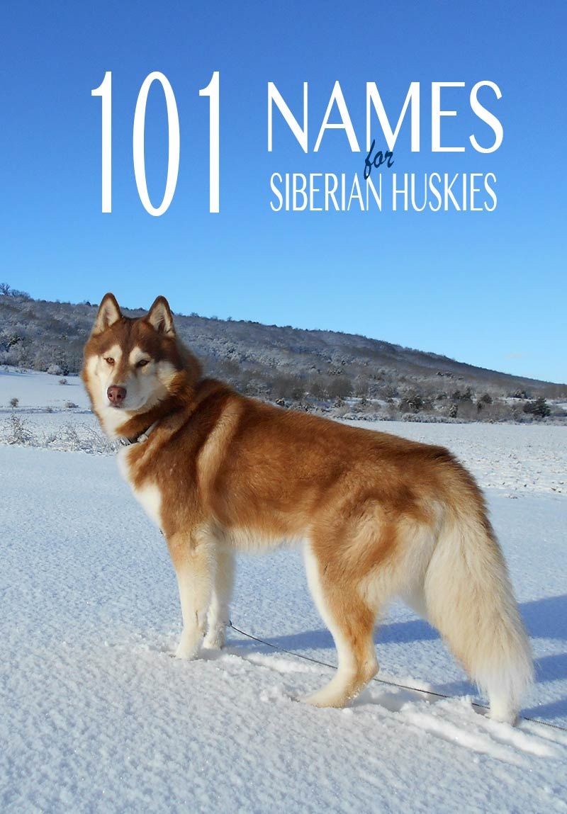 How to Name a Husky