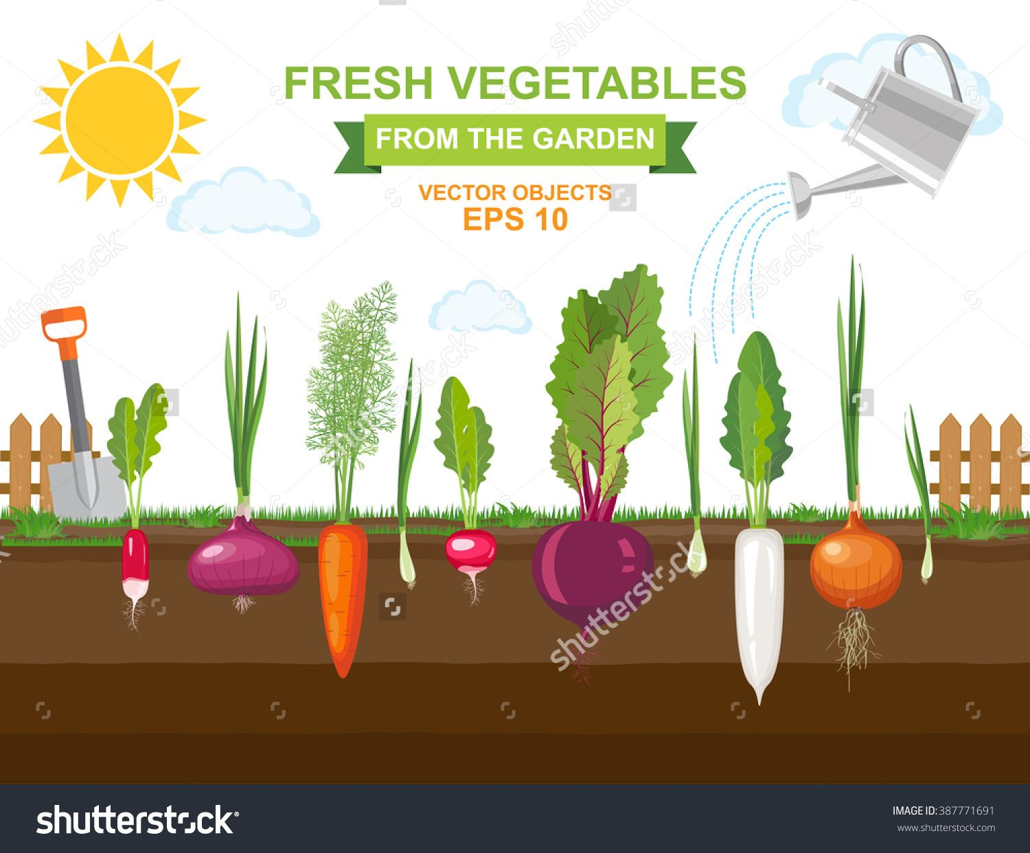 Vector Illustration Of Colorful Fresh Organic Food Spring Vegetable Garden With Different Kind
