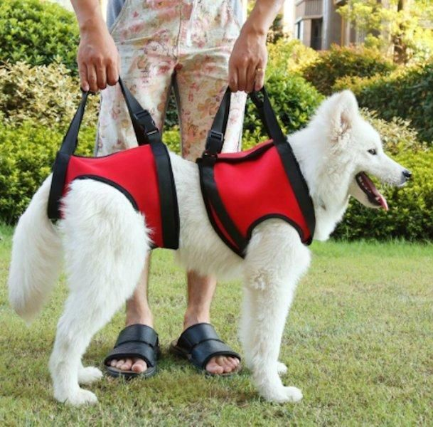 Front And Or Rear Dog Lift Harness With Handle Dog Harness Dog