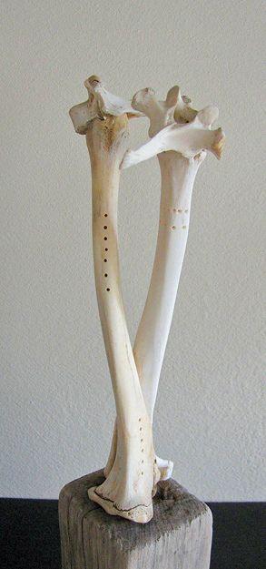 Giraffe Lovers, via Flickr.