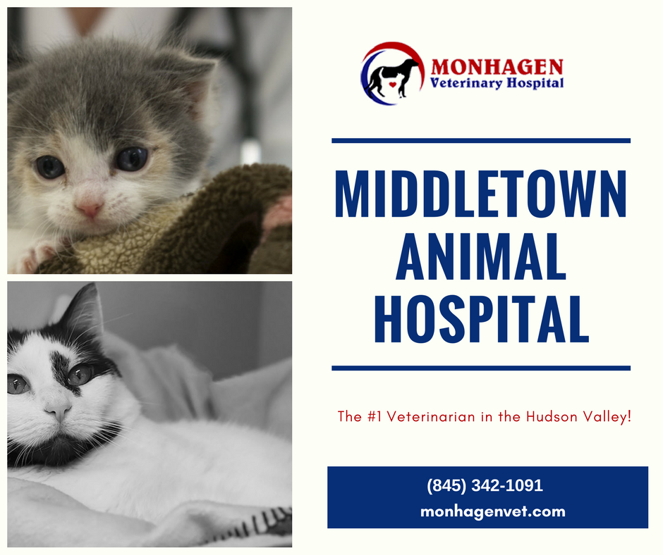 Middletown Animal Hospital is the no. 1 veterinarian in