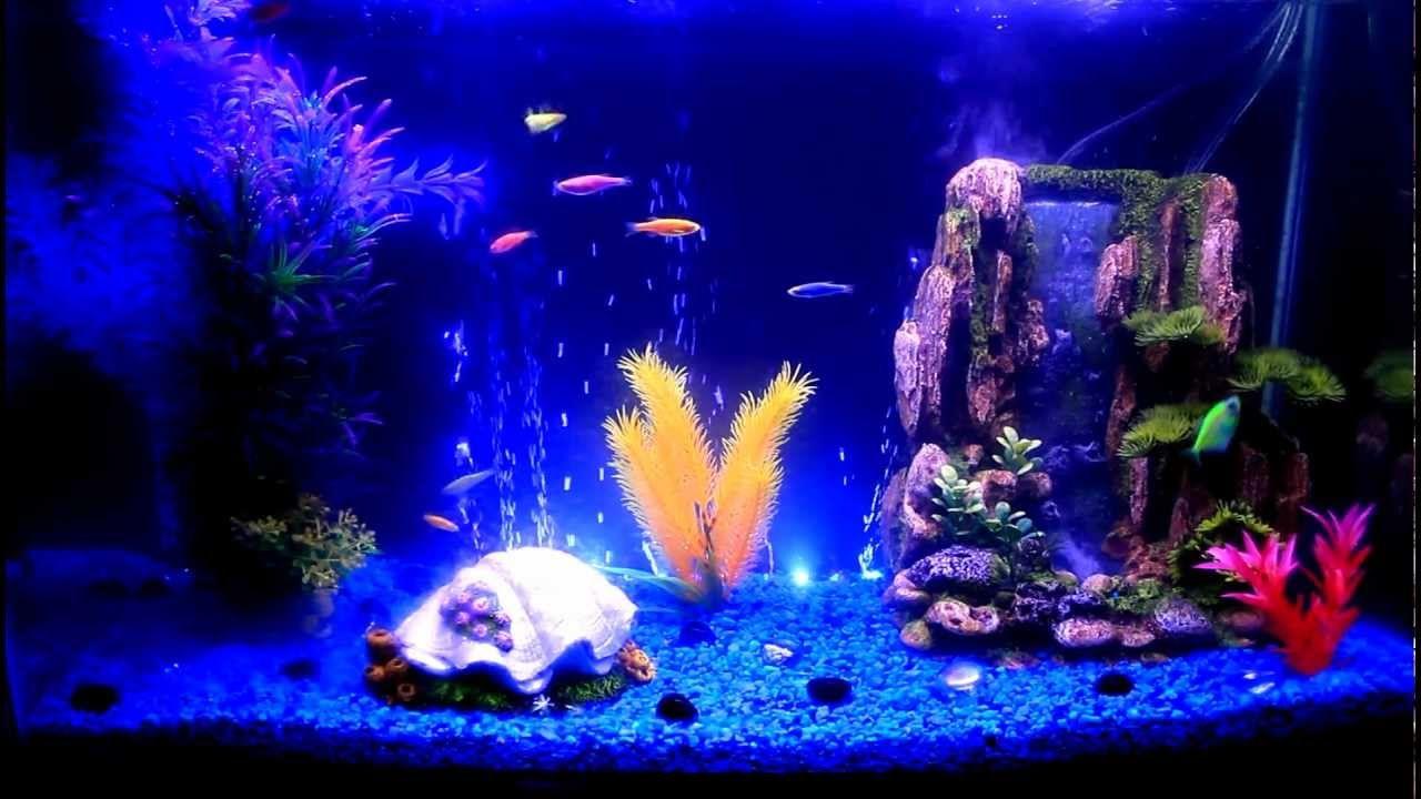 glofish danios & tetra- hd | tanked | pinterest | fish tank