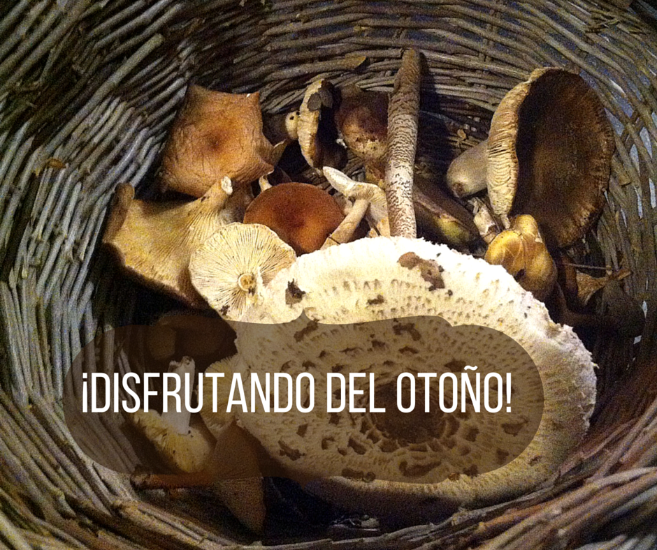 racias a nuestro clima Asturias también es un paraíso para las setas.  Ayer hicimos una miniescapada para recolectar algunas. ¡Cómo nos gusta el otoño !