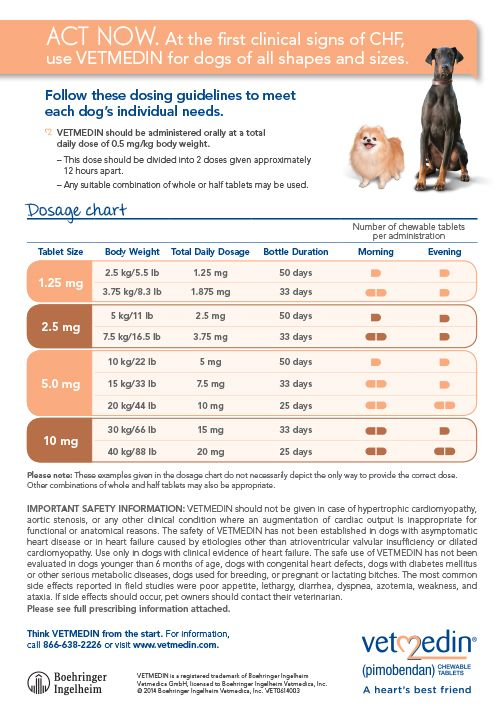 Veterinary care medicine your pet nursing ms daisy bellis also pin by kathryn stoltzfus on whats best for rh pinterest