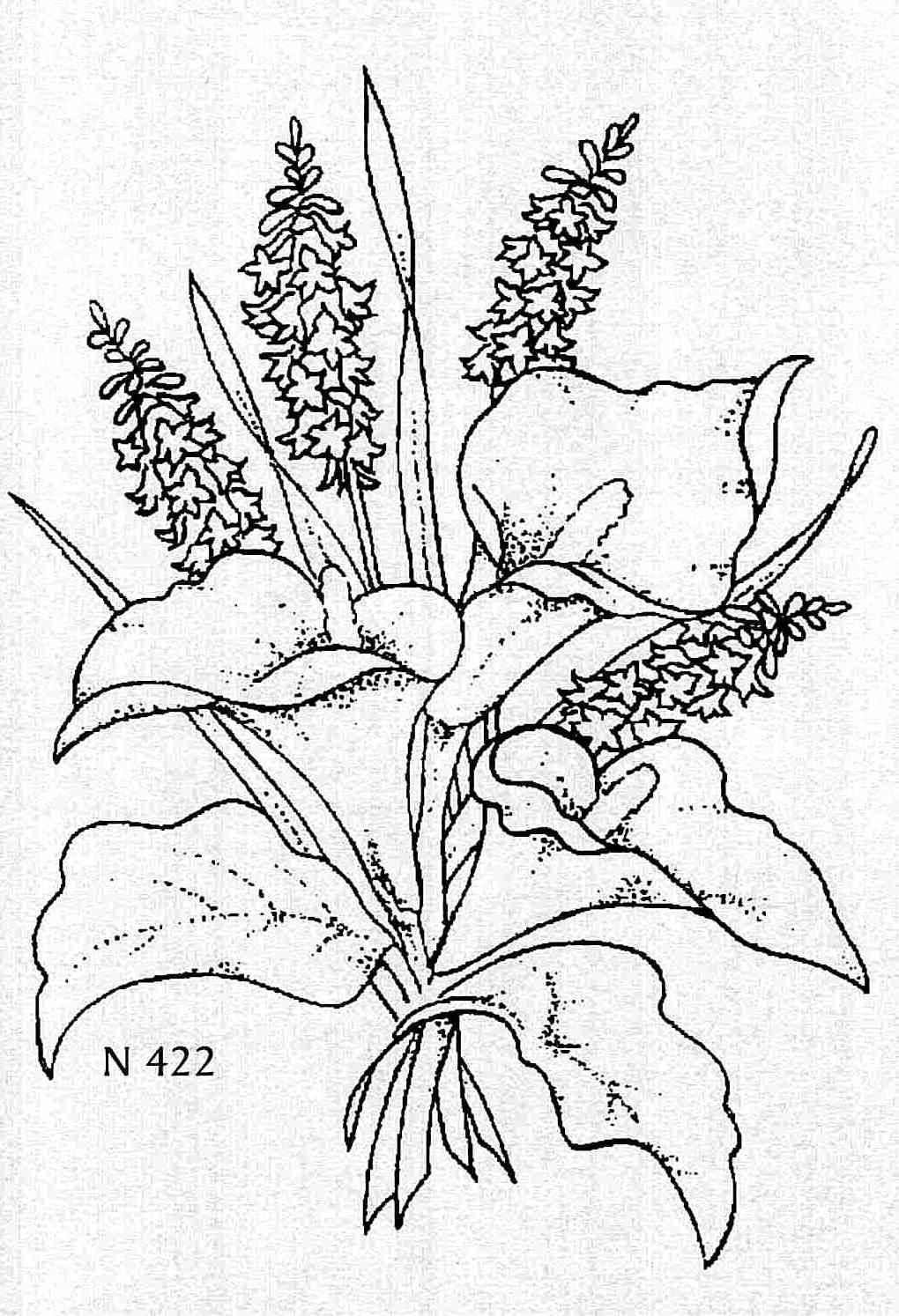 lily coloring pages arum lily cookie Flower Coloring