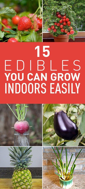 15 Edibles You Can Grow Indoors Easily Growing G*Ng*R 400 x 300