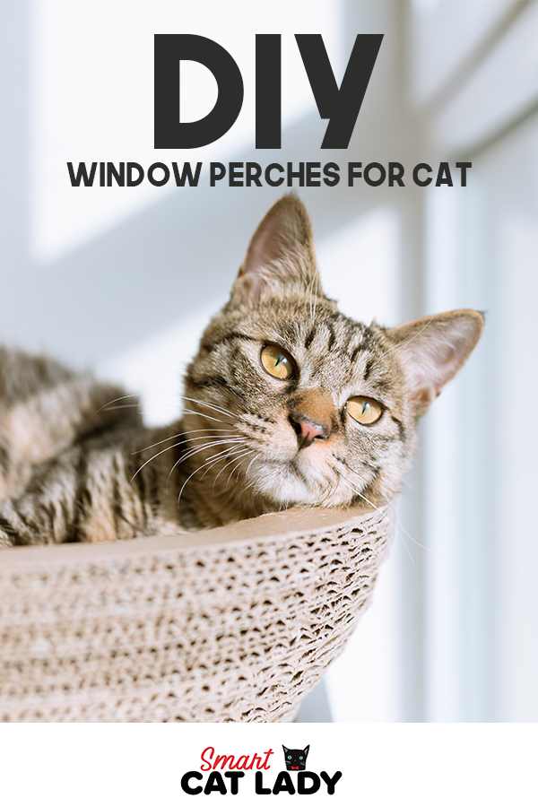 Do It Yourself Window Perches For Cat Cats, Cat perch