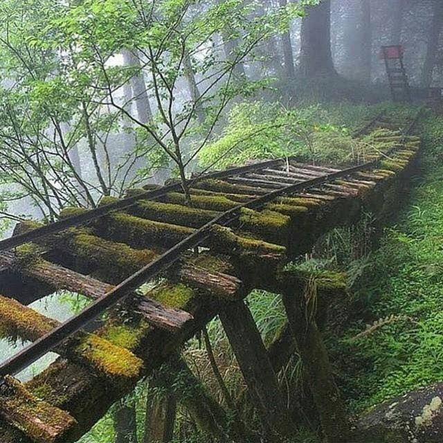 Abandoned Rail Bridge, Taiwan