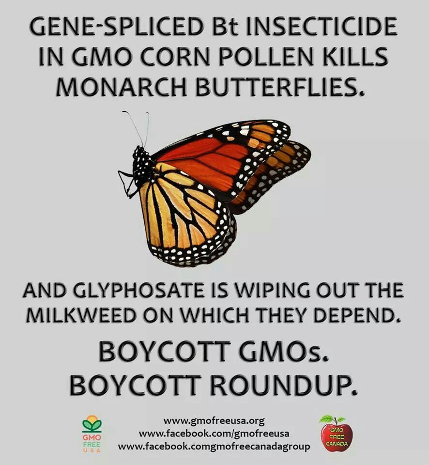 Imagine a world without butterflies! Gmo free usa