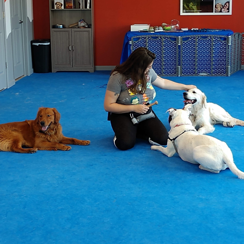 Dog agility mats interlocking tiles agility training for