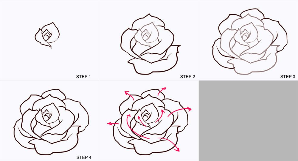 roses drawing step by step google search nature drawing