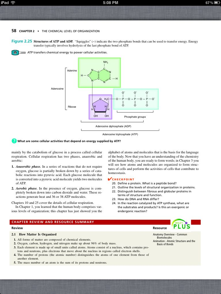 Principles of Anatomy and Physiology, Chapter 2, The Chemical Level ...