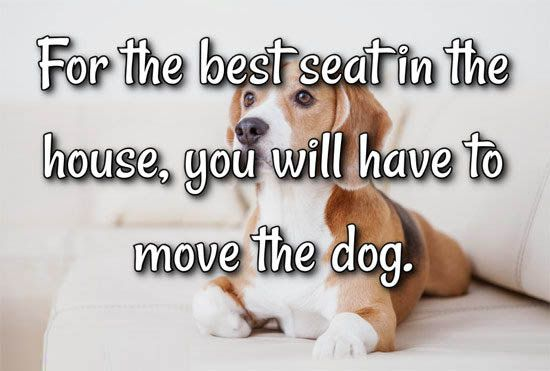 For The Best Seat In The House You Will Have To Move The Dog