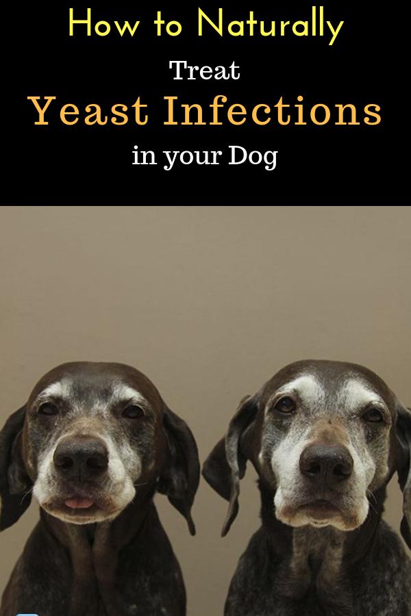 03b3303843a449a4209a02bb7c4b8502 - How To Get Rid Of Yeast In My Dog