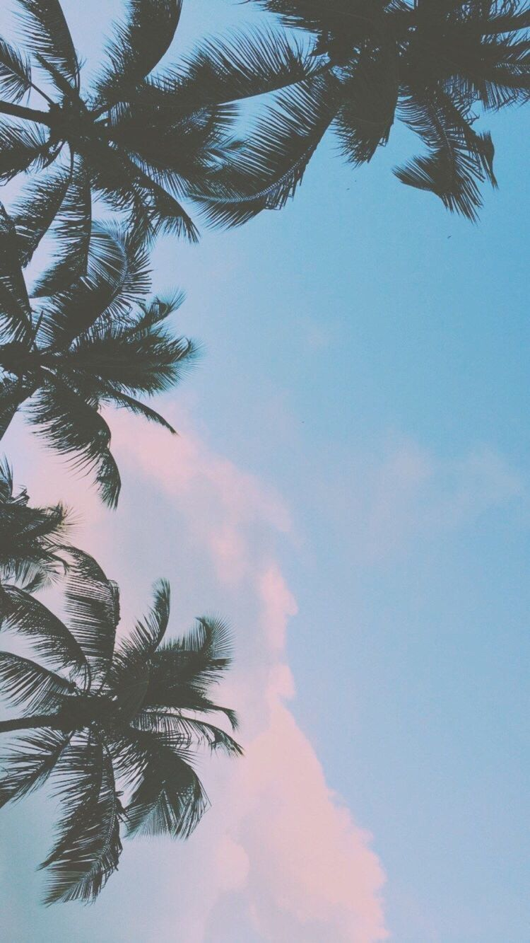 Coconut tree iPhone wallpaper