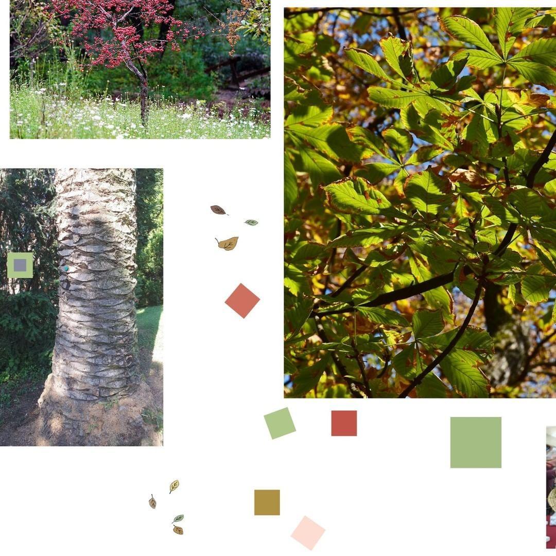 Pianta Foglie Rosse E Verdi 🍂 sai perché le foglie, in autunno, si trasformano in