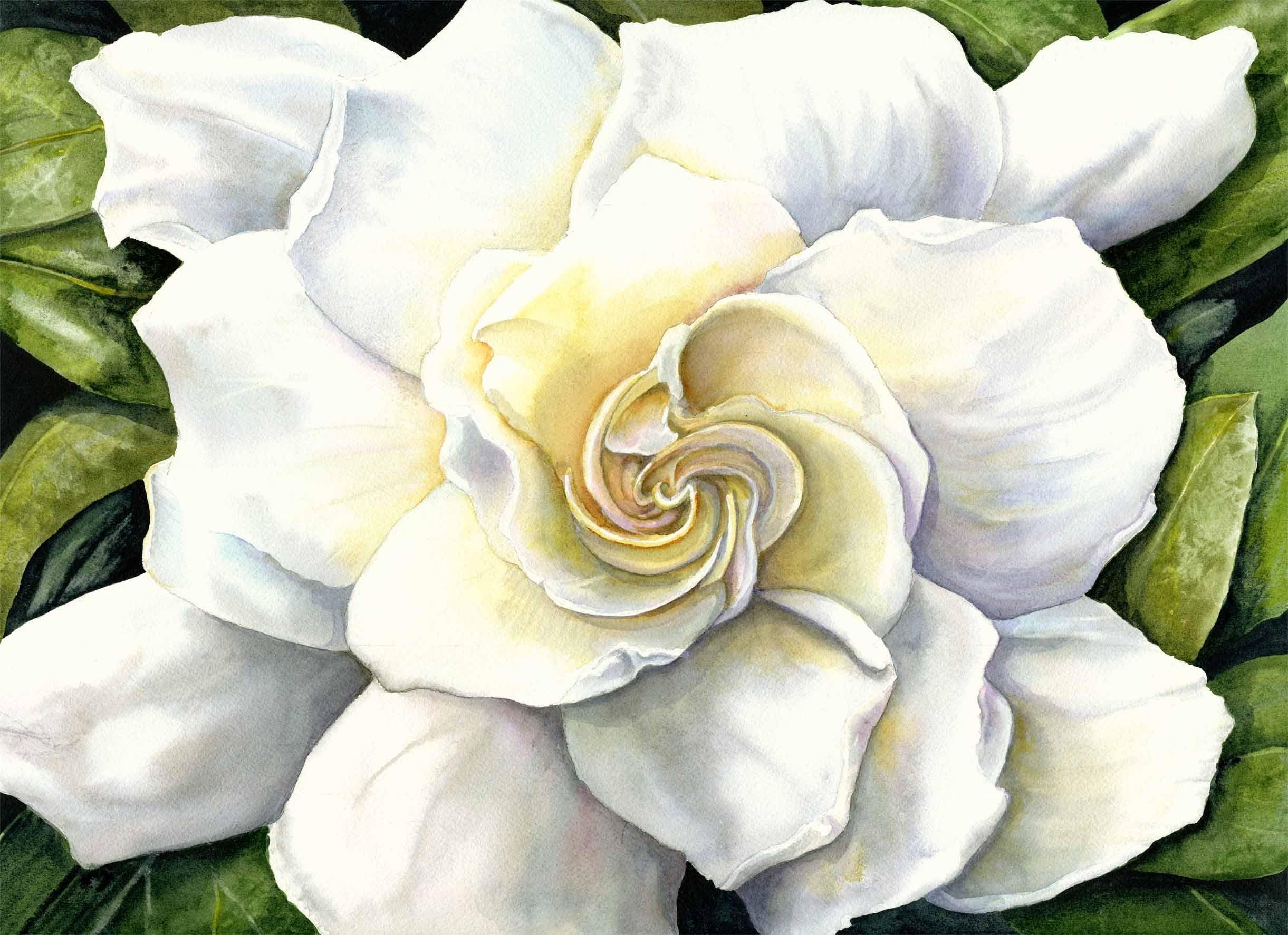 Gardenia painting gardenia flowe flower painting flower