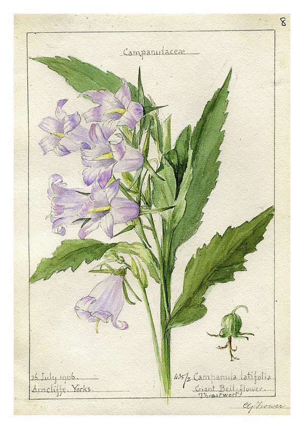 Картинка запор, открытки ботаника