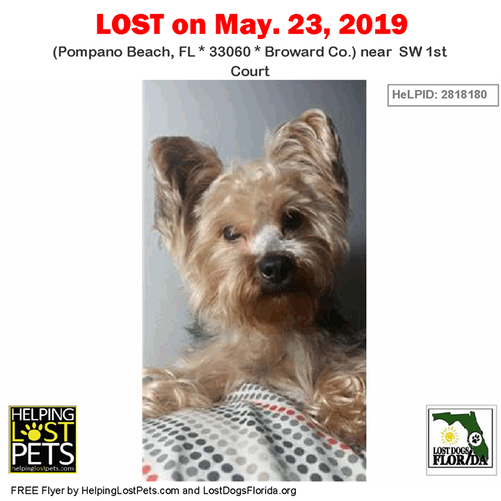 Lost Dog Have You Seen Eliecer Lostdog Eliecer Pompanobeach Sw 1st Court Fl 33060 Broward Co Dog 05 Losing A Dog Yorkie Yorkshire Terrier Dogs