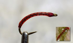 Photo of The Gut-bomb Bloodworm