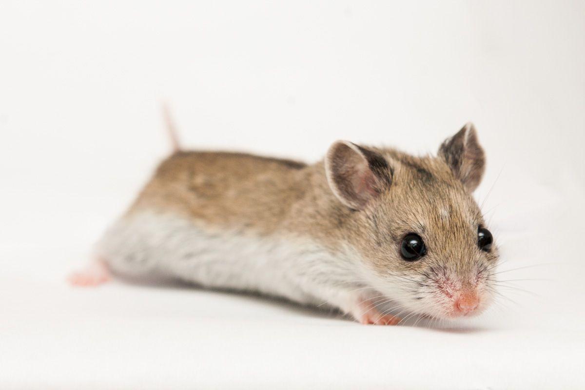 Demonterai hamster.com momma