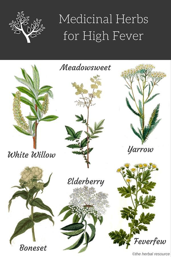 Richo Cech Making Plant Medicine Pdf Download