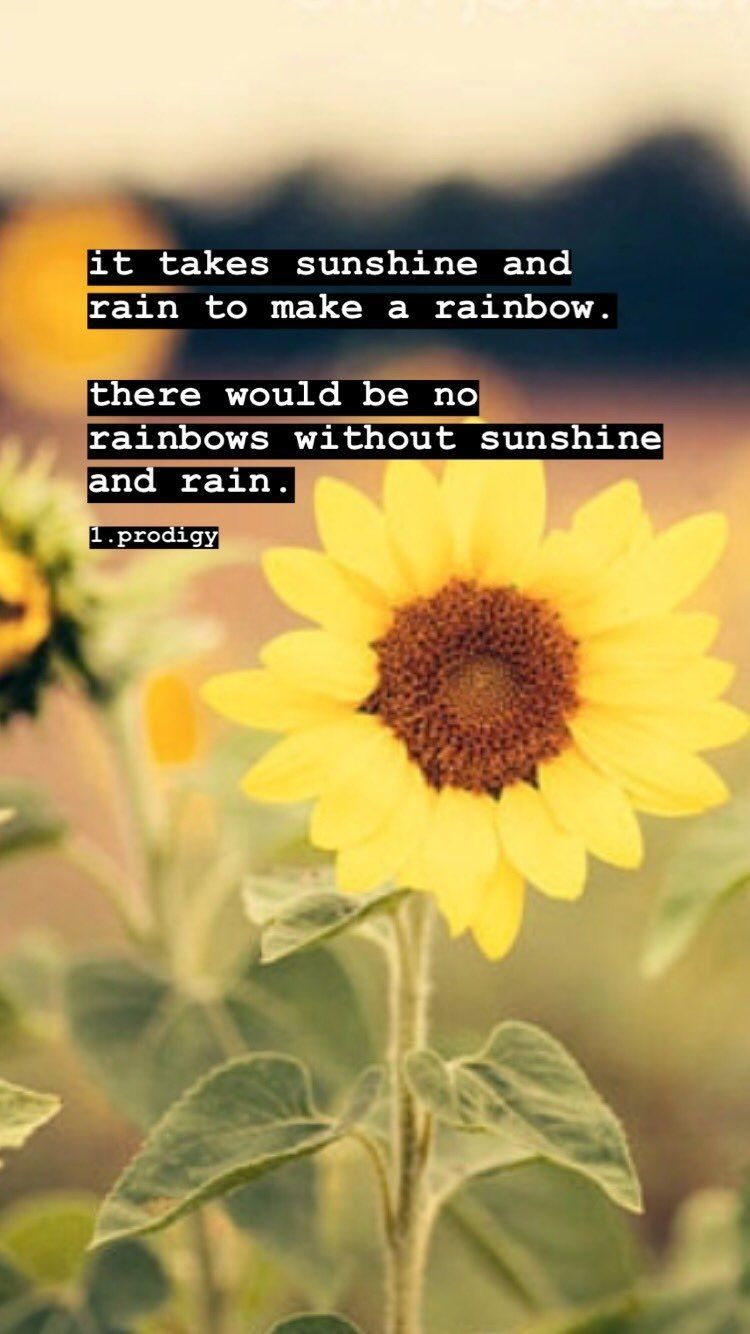 Sunshine, sunflowers, rain, 🌈rainbows, inspirational quote