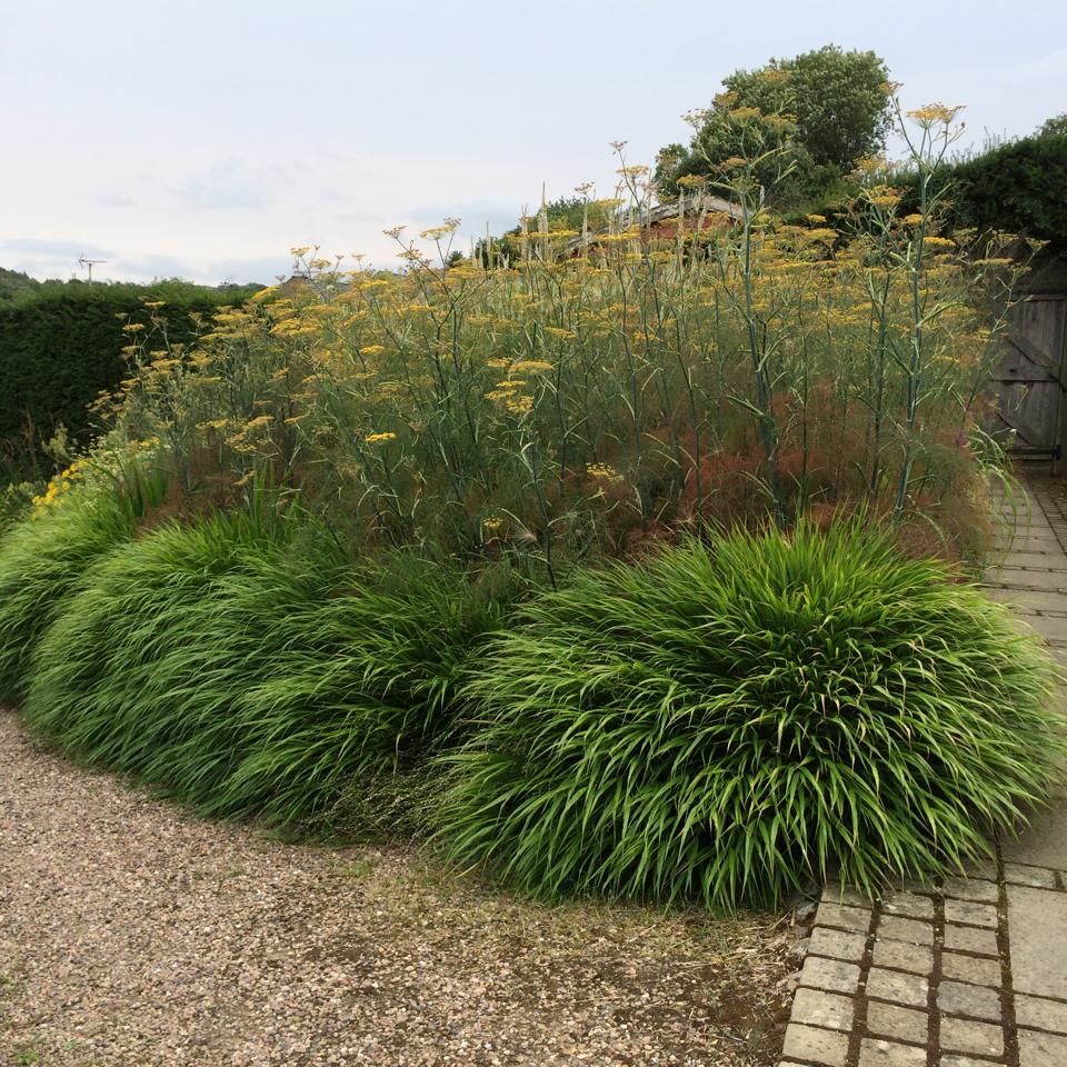 Form definition perennials and ornamental grasses for Planting schemes with grasses