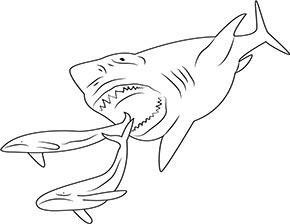 Ausmalbild Hai Jagt Fische In 2020 Ausmalen Ausdrucken Ausmalbild