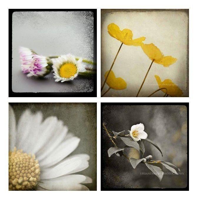 Daisy & Poppy Photography Set, modern baby nursery prints, grey black yellow white, vintage inspired, flower - Four 4x4 photos. $18.00, via Etsy.