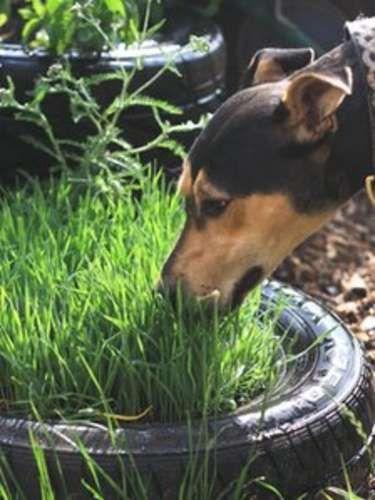 garden to de-stress dogs at Bath animal shelterSensory garden to de-stress dogs at Bath animal shelter