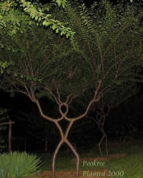 Pooktre Tree Shaping It S Unlike Anything You Ve Ever Seen Arbre Arbre Cabane Cabane Perchee