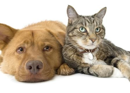 PAST DEAL Sacramento SPCA, 10 donation! Pets, Dog cat