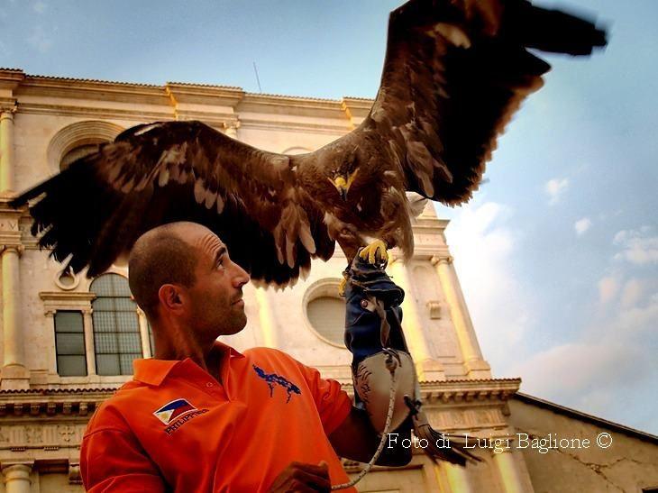 Arte della falconeria con Antonello Dundee