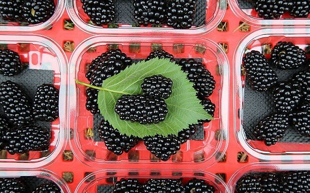 Game-changing sweet blackberries could treble market in five years - Read more at:  http://www.producebusinessuk.com/insight/insight-stories/2017/08/08/game-changing-sweet-blackberries-could-treble-market-in-five-years